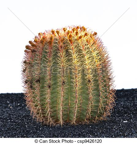 Stock Photography of Cactuses in Lanzarote island, Spain.
