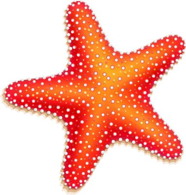 Echinoderms Clipart.