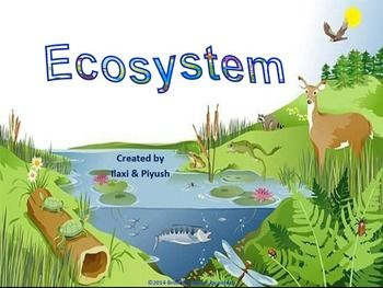 Forest ecosystem clipart.