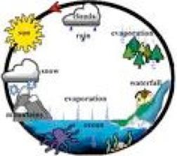 Ecosystem..