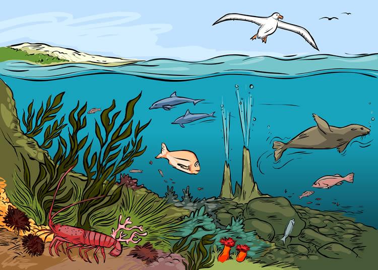 Ocean ecosystem clipart.