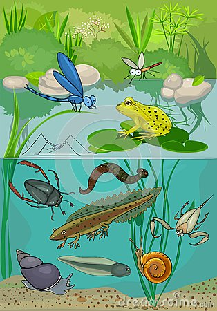 A Pond Ecosystem Royalty Free Stock Images.