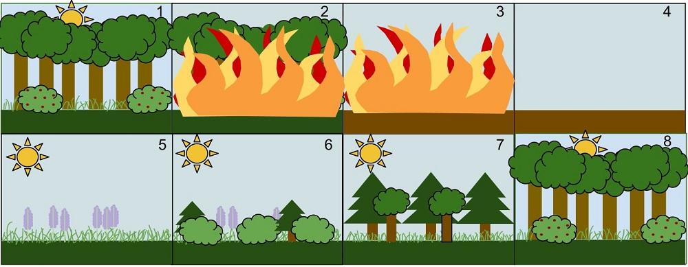 Ecological Succession.