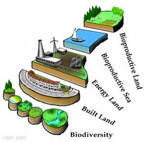 ecology2011tamara2011sp.