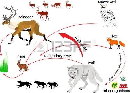Ecosystem clipart free.