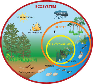 All About Ecosystems Easy Science For Kids A Diagram Of An.