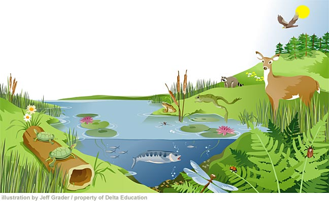 Pond Ecosystem Clipart.