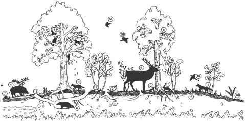woodland ecosystem.