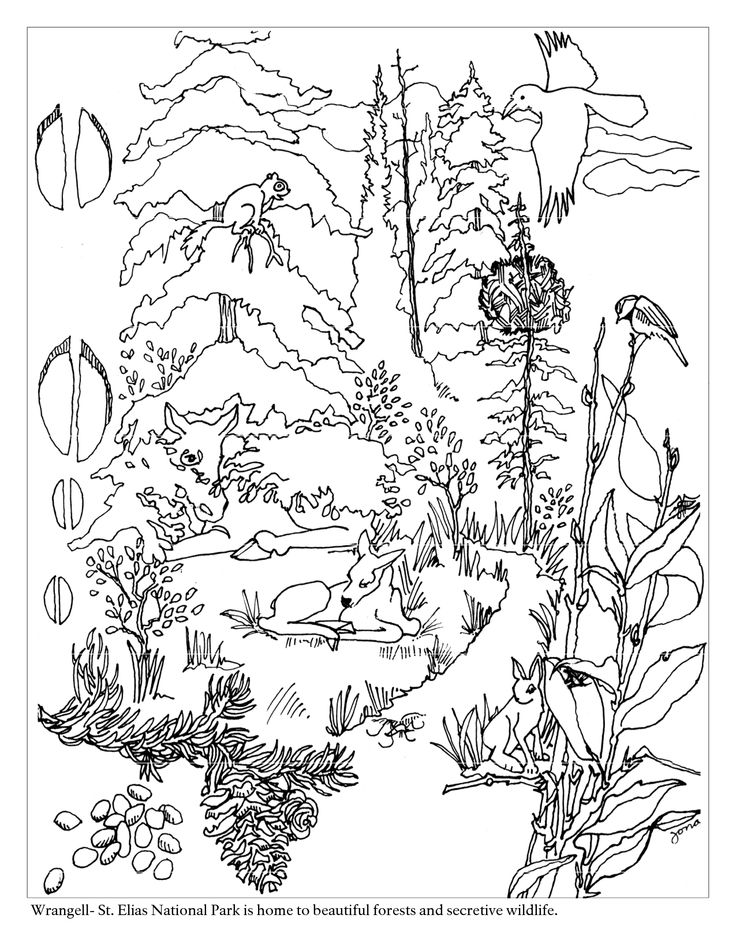 color forest ecosystem Colouring Pages.