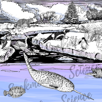 Realistic Arctic Animal Clipart: Tundra Ecosystem Line Art {Black and White}.