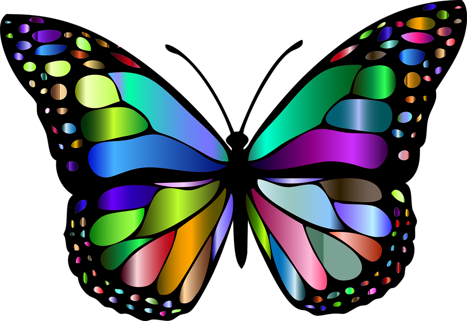 Free vector graphic: Animal, Butterfly, Chromatic.