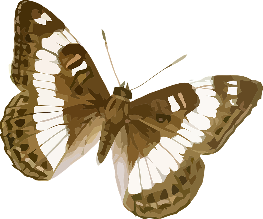 Free vector graphic: Animal, Butterfly, Insect, Nature.