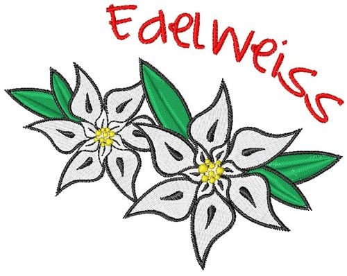 1000+ images about edelweiss on Pinterest.