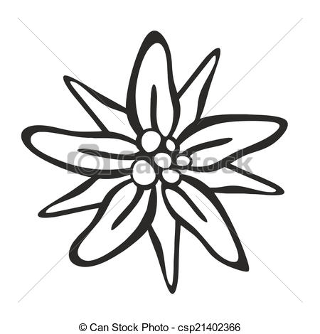 Edelweiss Illustrations and Stock Art. 136 Edelweiss illustration.