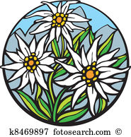 Edelweiss Clipart and Illustration. 101 edelweiss clip art vector.