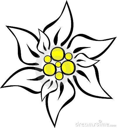 Edelweiss flower clipart 1 » Clipart Portal.