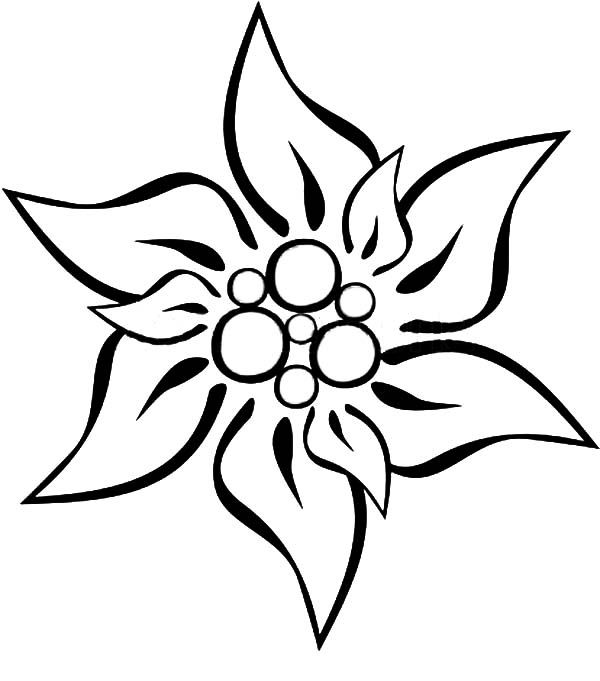 edelweiss flower coloring page.