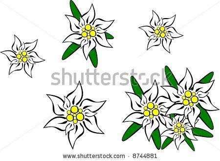 clip art, eidelweiss.