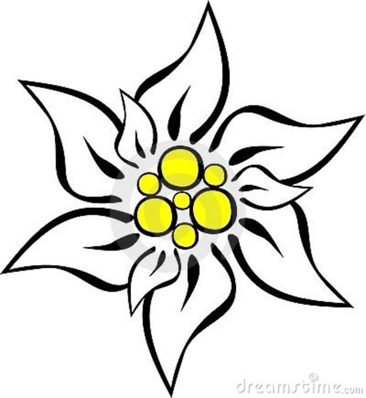 Edelweiss Flower Clipart.