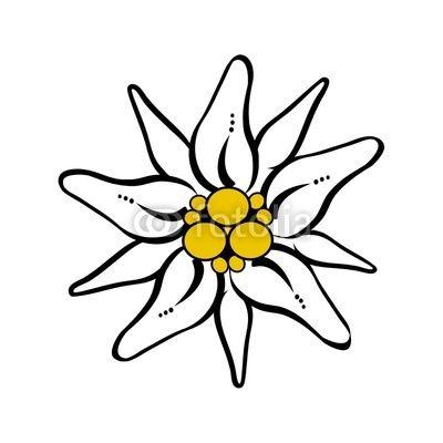 Edelweiss Flower Drawing.