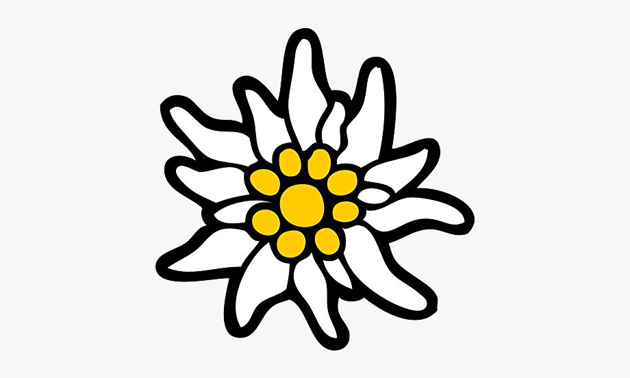 Edelweiss Png , Transparent Cartoon, Free Cliparts.