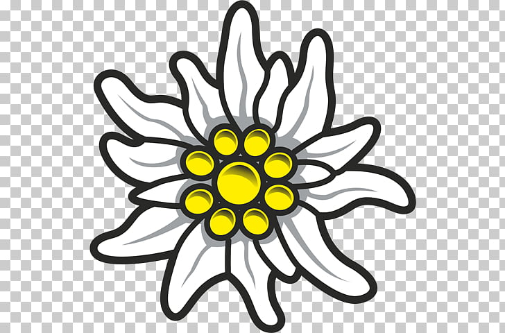 Edelweiss PNG clipart.