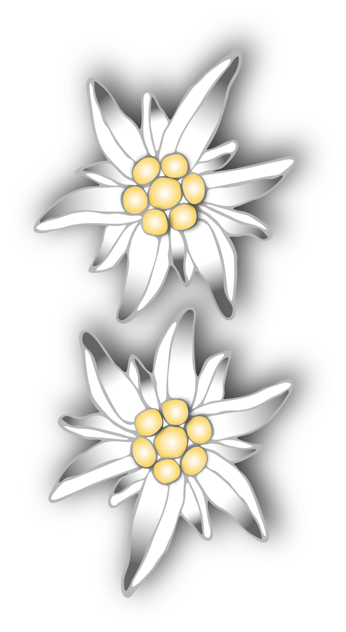 Edelweiss Transparent PNG Pictures.