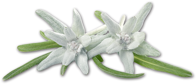 HD Edelweiss Png.
