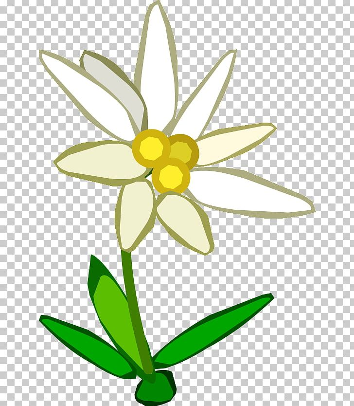 Edelweiss PNG, Clipart, Edelweiss Free PNG Download.