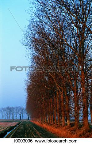 Stock Images of France, Normandy, Trees on edge of field f0003096.