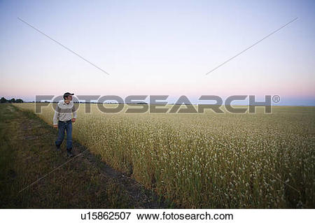 Picture of Farmer walking along edge of canary seed field.