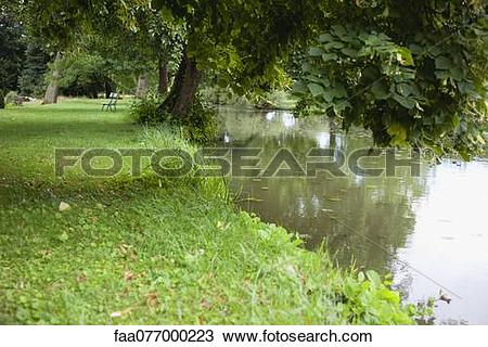 Stock Photo of Tree growing at edge of pond faa077000223.