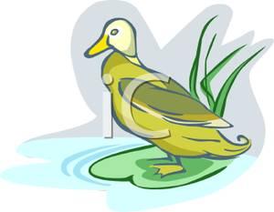 A_Duck_on_the_Edge_Pond_091213.