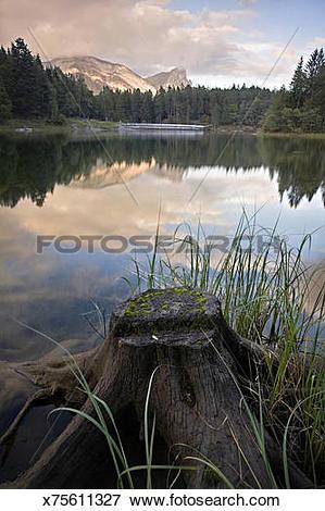 Picture of Tree stump by edge of Lake Mellsee, Heidiland, Swiss.