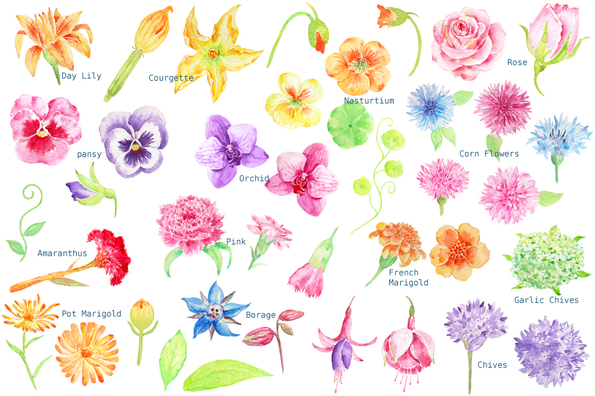 Watercolor Edible Flowers Clipart by Cornercroft.
