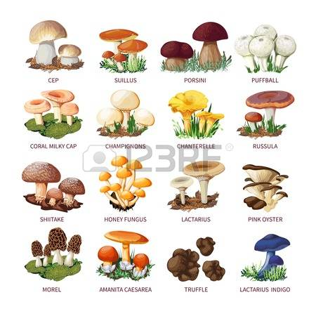 4,058 Edible Stock Illustrations, Cliparts And Royalty Free Edible.