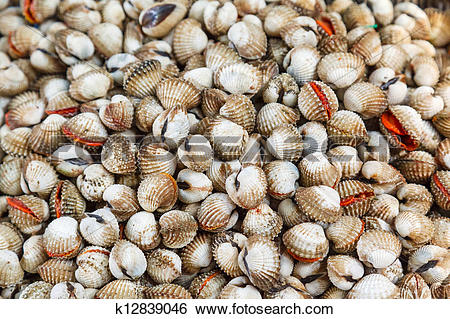 Stock Images of Shellfish Blood Cockles edible background.