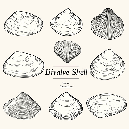 Clams Clip Art, Vector Images & Illustrations.