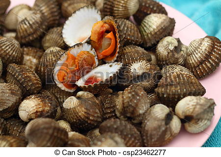 Picture of Fresh Blood Cockles market edible background.