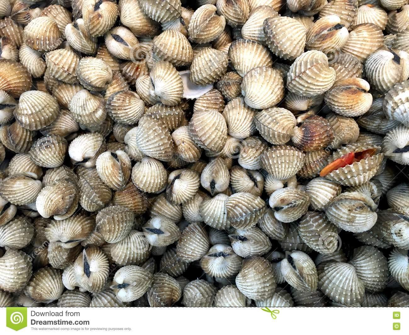 Fresh Cockles (bivalve) In Market Stock Photo.
