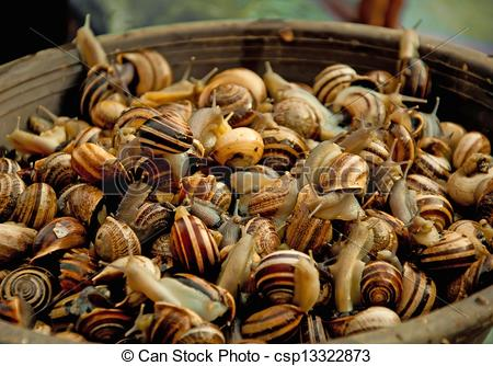 Picture of Live edible snails in a brown basket csp13322873.