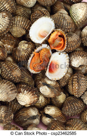Pictures of Fresh Blood Cockles market edible background.