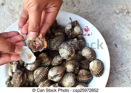 Stock Images of Fresh Blood Cockles market edible background.