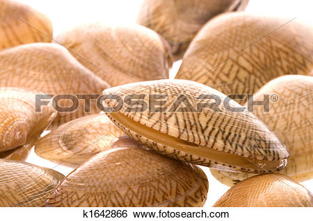 Stock Images of Live Edible Clams Macro k1642866.