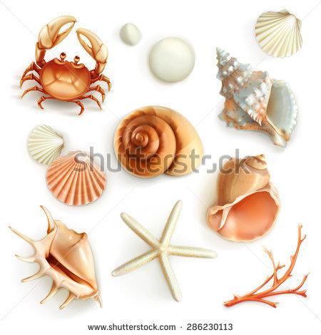Shellfish Stock Images, Royalty.