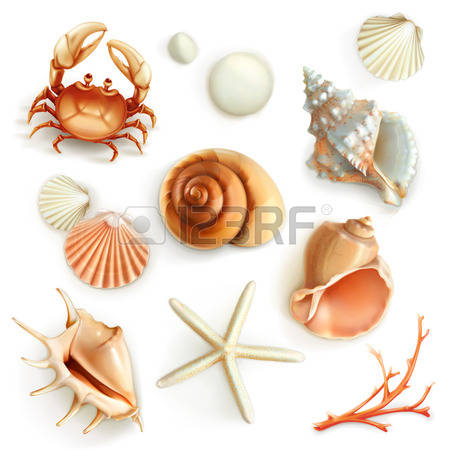 47,832 Shell Stock Vector Illustration And Royalty Free Shell Clipart.