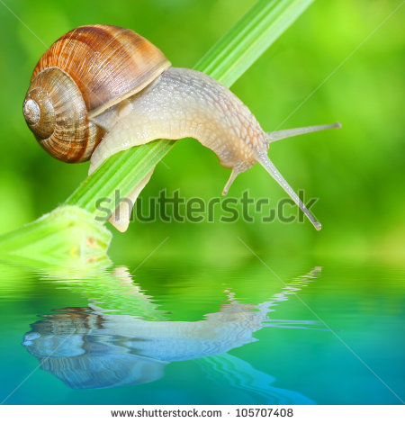 Edible Snail Stock Photos, Royalty.