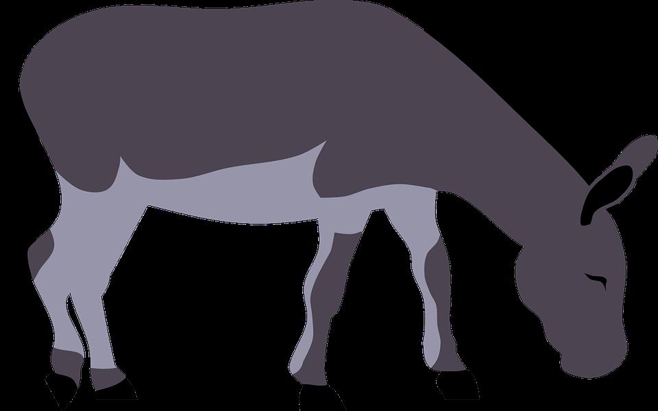 Free vector graphic: Animal, Donkey, Farm, Grassing.