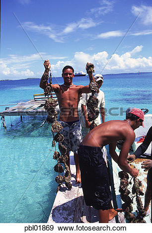 Stock Photograph of Black Pearl farm, Ahe, Tuamotus, Franch.