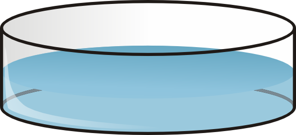 Petri Clipart.
